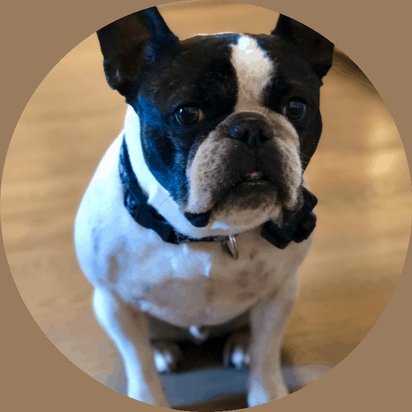 Huxley Greene, Su-Paw-Visor at Carolina Professional Insurance